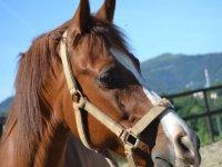 Monta a caballo