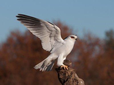 Observación de aves rapaces en Cabañeros 8 h