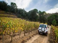 off-road vehicle between the vineyards