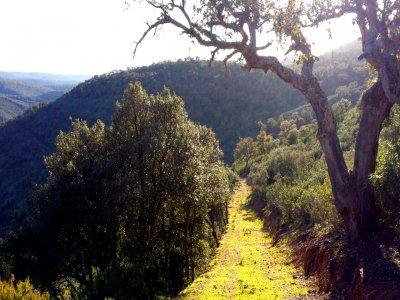 在Cabañeros公园徒步旅行