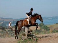 跳跃的马棕色马轮廓