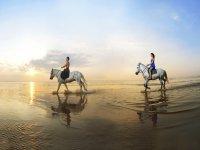 构成沙滩海景几匹马图片中白色的马场