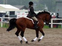 骑马骑草地尼娜