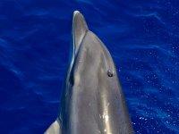 Observación de cetáceos en el Valle Gran Rey