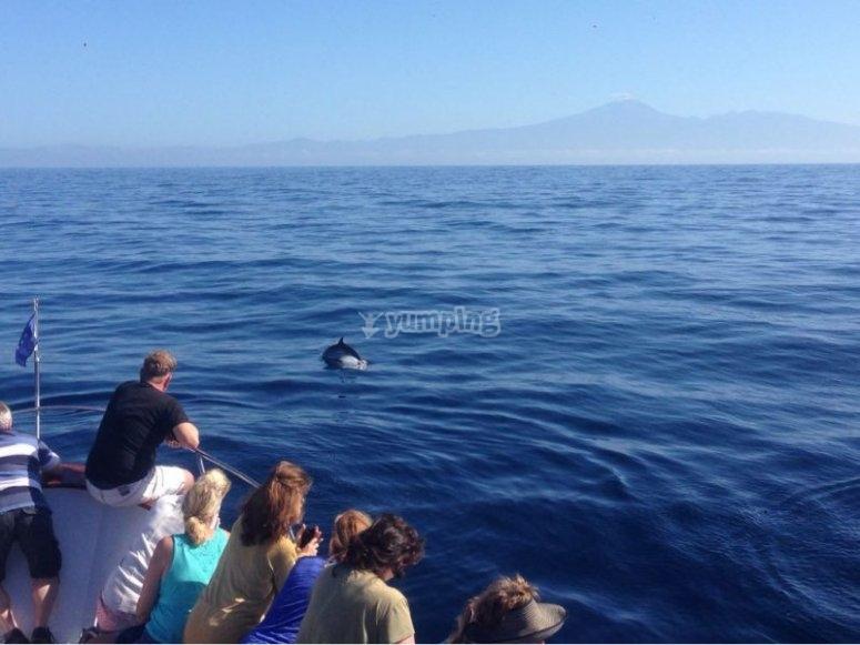 avistamiento de delfín