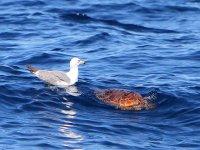 Observación de cetáceos en Valle Gran Rey, 4 h