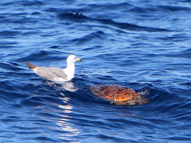 Tortuga marina con gaviota