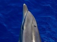 Observación de cetáceos para niños  en La Gomera