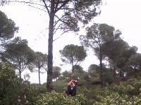 Salto entre los árboles