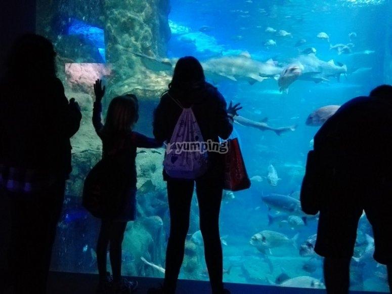 Visitando l'acquario