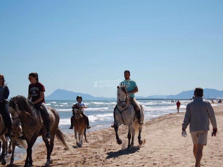 Horses in the beach of Gandia