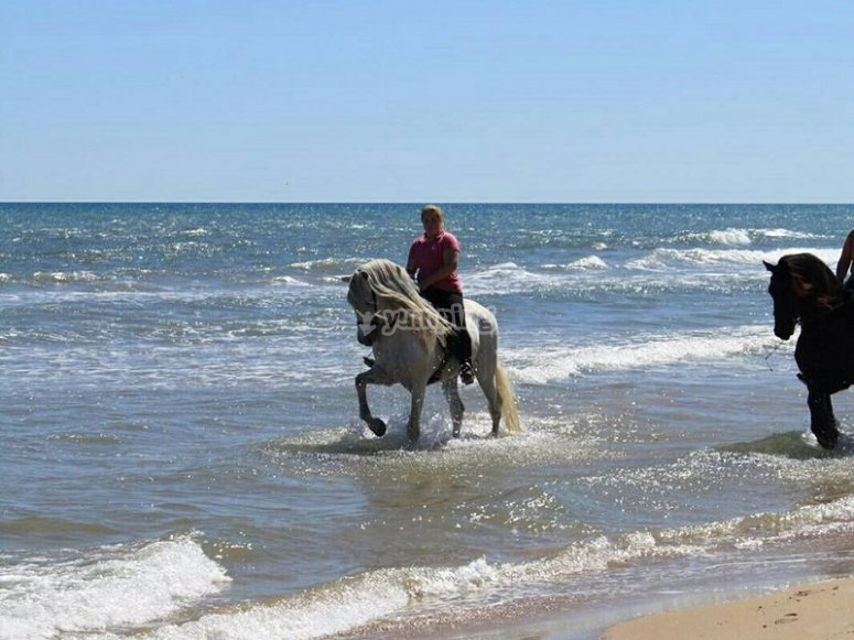 Galloping over the beach waters of Gandia