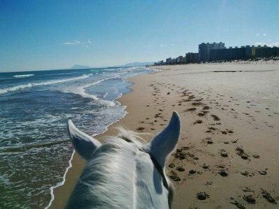 沿着Gandía或la Marjal海滩骑马