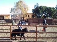 Cavalcando in pony