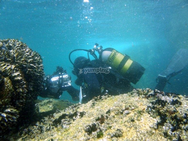 Diving on the Islas de Arousa