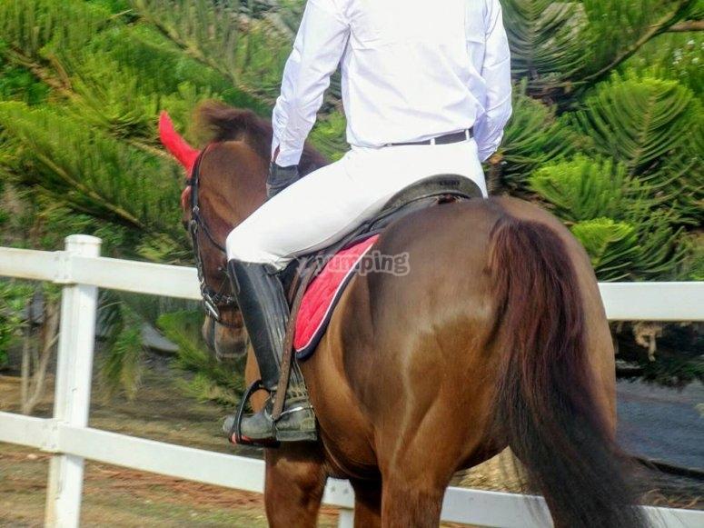 在大加那利岛的骑马