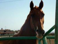 我们的一匹马