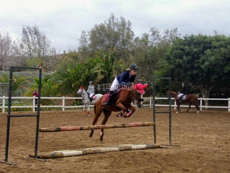 Horse jumping session