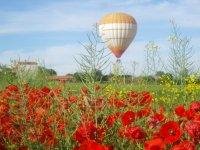 罂粟花和气球