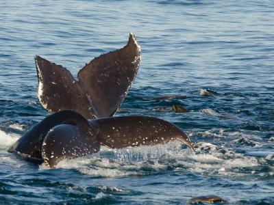 Avistamiento de cetáceos en Tarifa, 5 horas