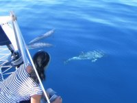 Watching dolphins