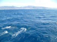 Delfines alejandose