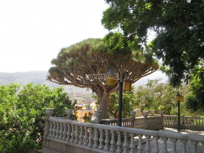 Views of Candelaria