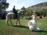 Novia bailando en su boda