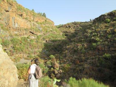 Senderismo al Barranco del Rincón en Candelaria 2h