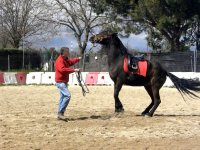 Educando al equino