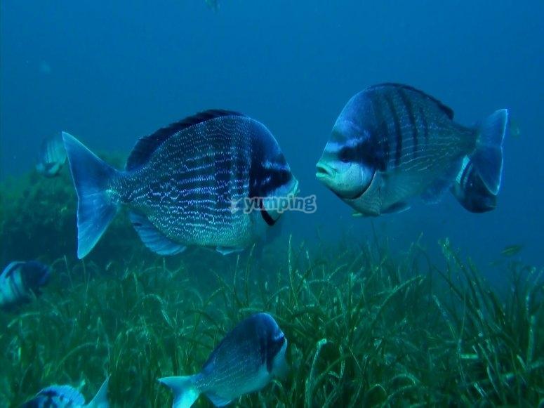 海洋保护区
