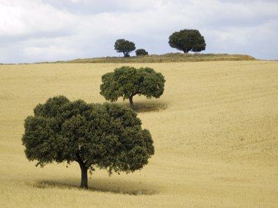 穿过Herencia的La Mancha平原