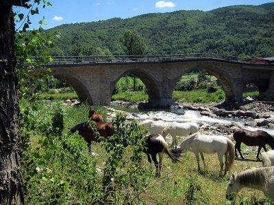 从科尔多瓦到Alcolea的路线