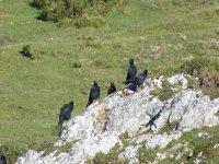 Oiseaux alpins