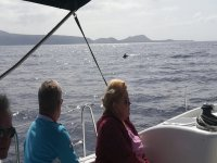 Desde el barco viendo un delfín
