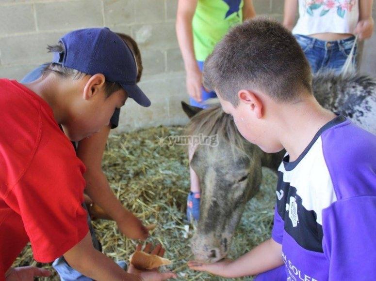Alimentando con pan al caballo en uno de nuestros talleres