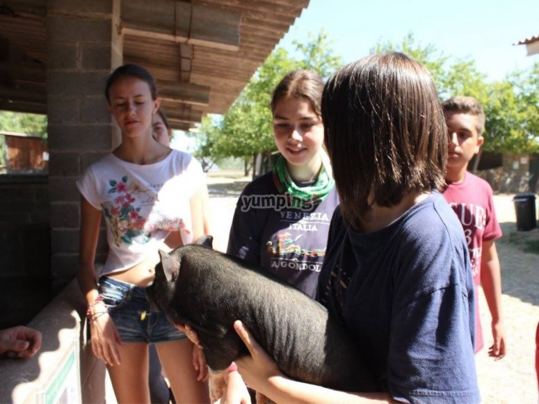 Interacting with the ponies