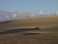 半荒漠地区的并行路径