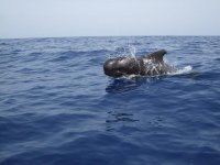 Whales south of tenerife