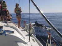Engraving the dolphin from the boat