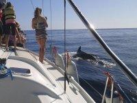 Grabando al delfin desde el barco