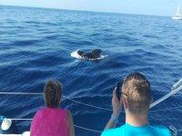 Pasajeros fotografiando a los cetáceos