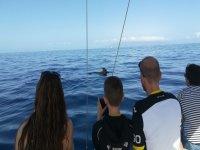 Pasajeros presenciando el paso de los delfines
