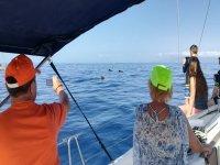 Delfilnes junto a los pasajeros del barco