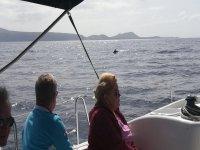 观看鲸类动物的游船