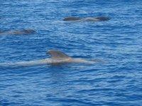 navegando junto a ballenas