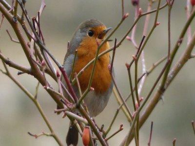 Observación de aves y naturaleza andando