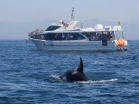 Whale Watching in Gibraltar Low Season