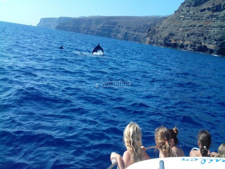 海豚跃升到我们之前