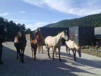 caballos de la granja